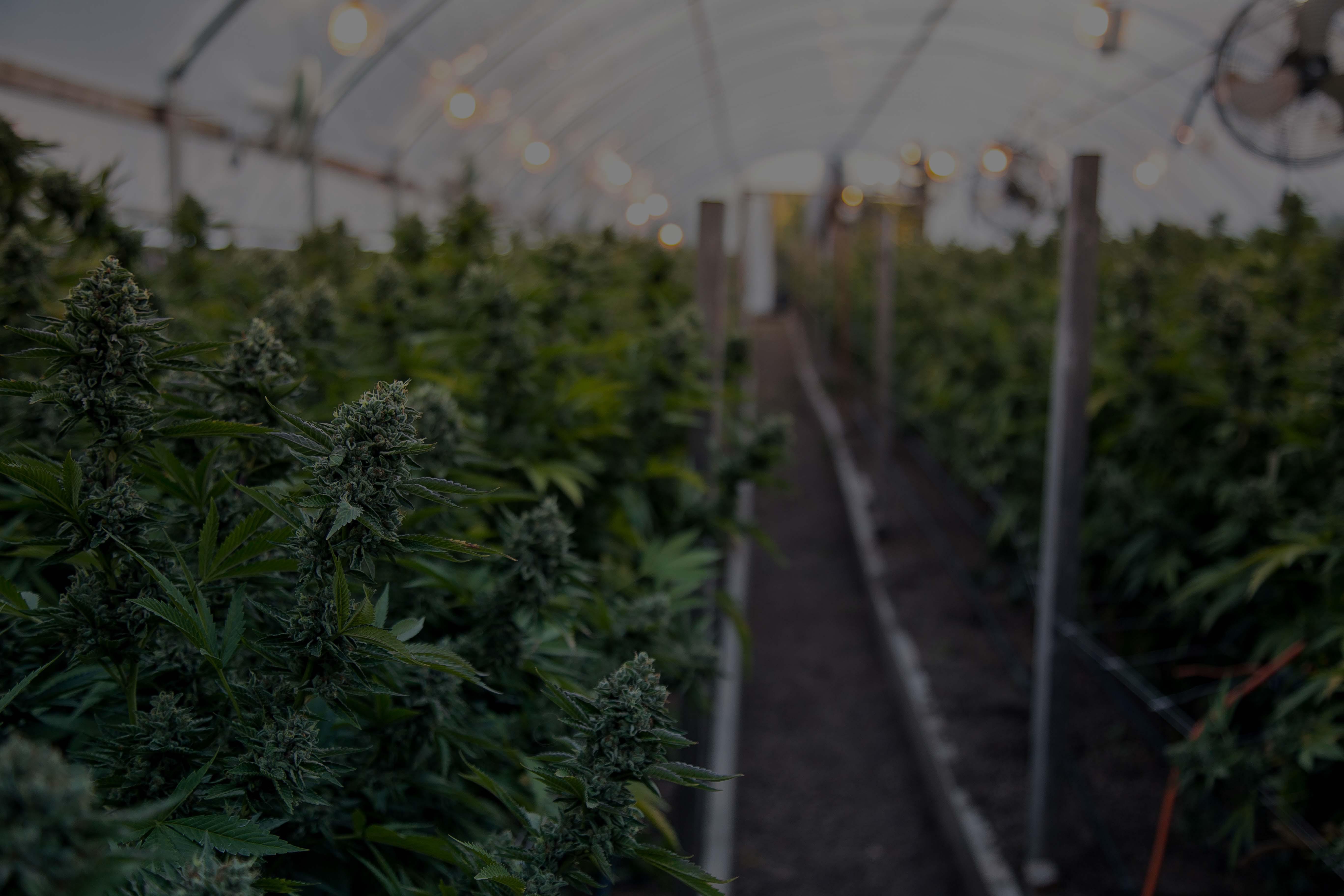 Growlink Indoor Cannabis Greenhouse