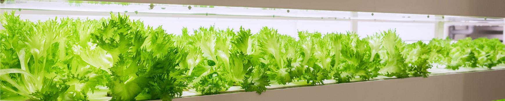 future of farming photo