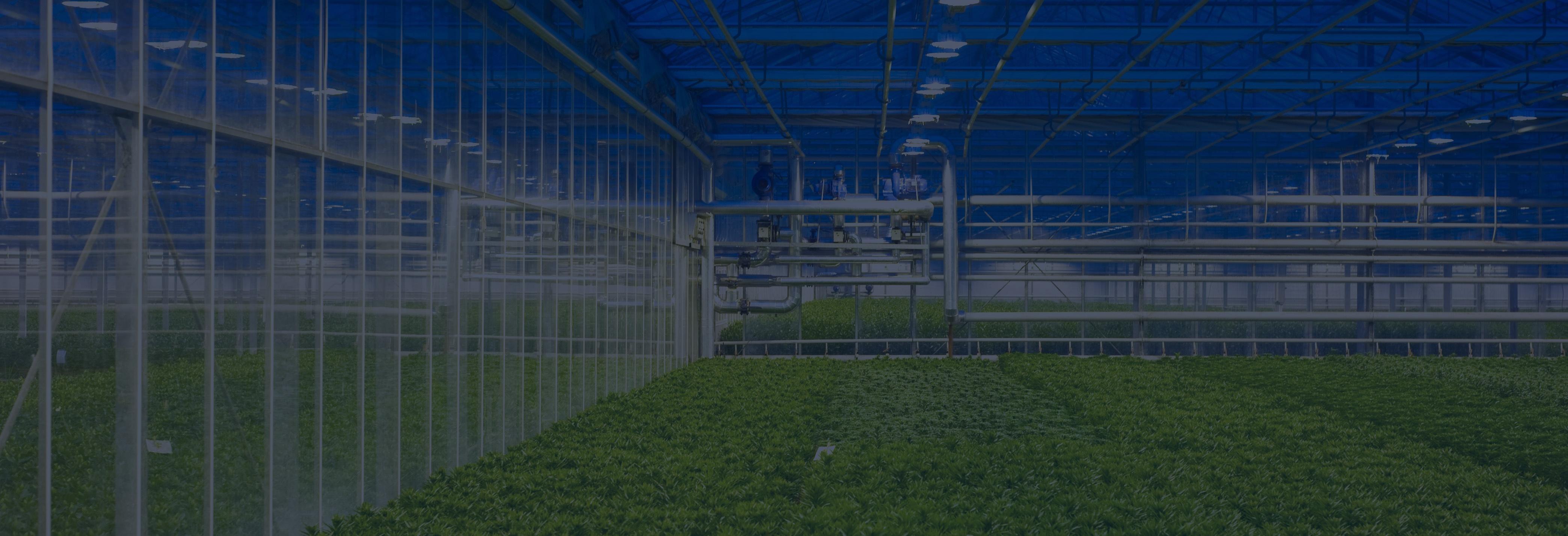 greenhouse_banner-2.jpg